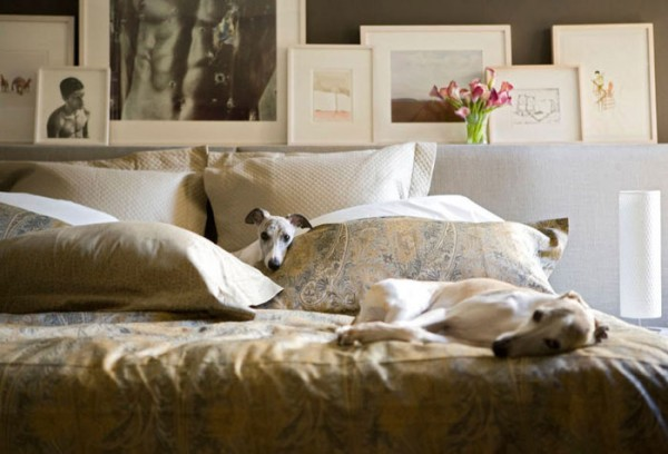Greyhounds on bed