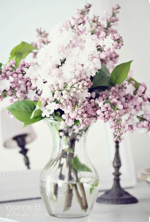 lilacs-yvonne b. photography